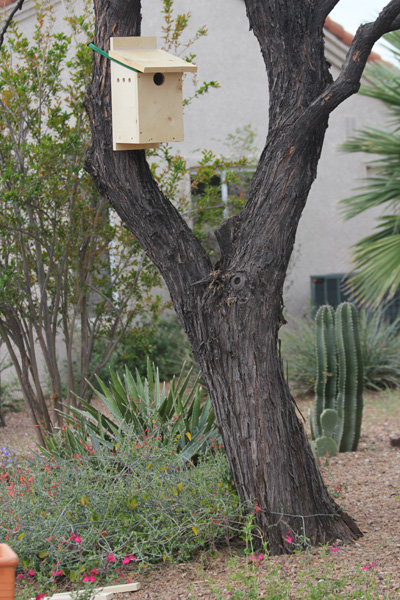 nestbox_in_tree_KendallKroesen